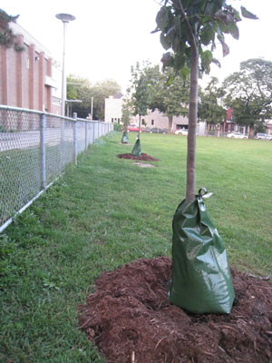 gator-bag-tree