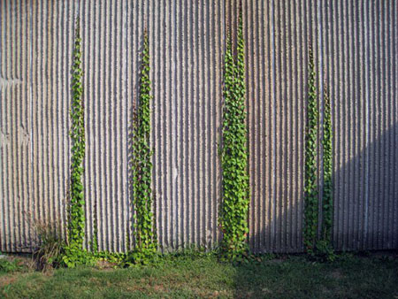 mccormick-vines1
